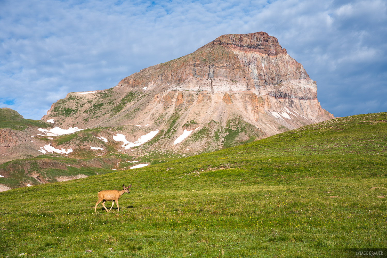 Colorado, San Juan Mountains, Uncompahgre Peak, Uncompahgre Wilderness, deer, photo