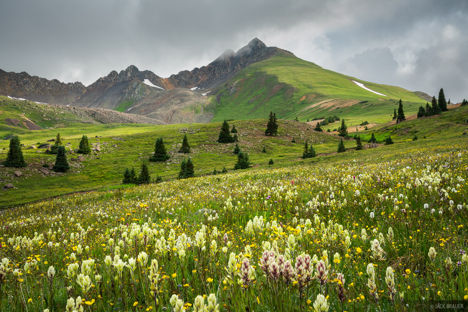 Colorado, Matterhorn Peak, San Juan Mountains, Uncompahgre Wilderness, wildflowers, photo