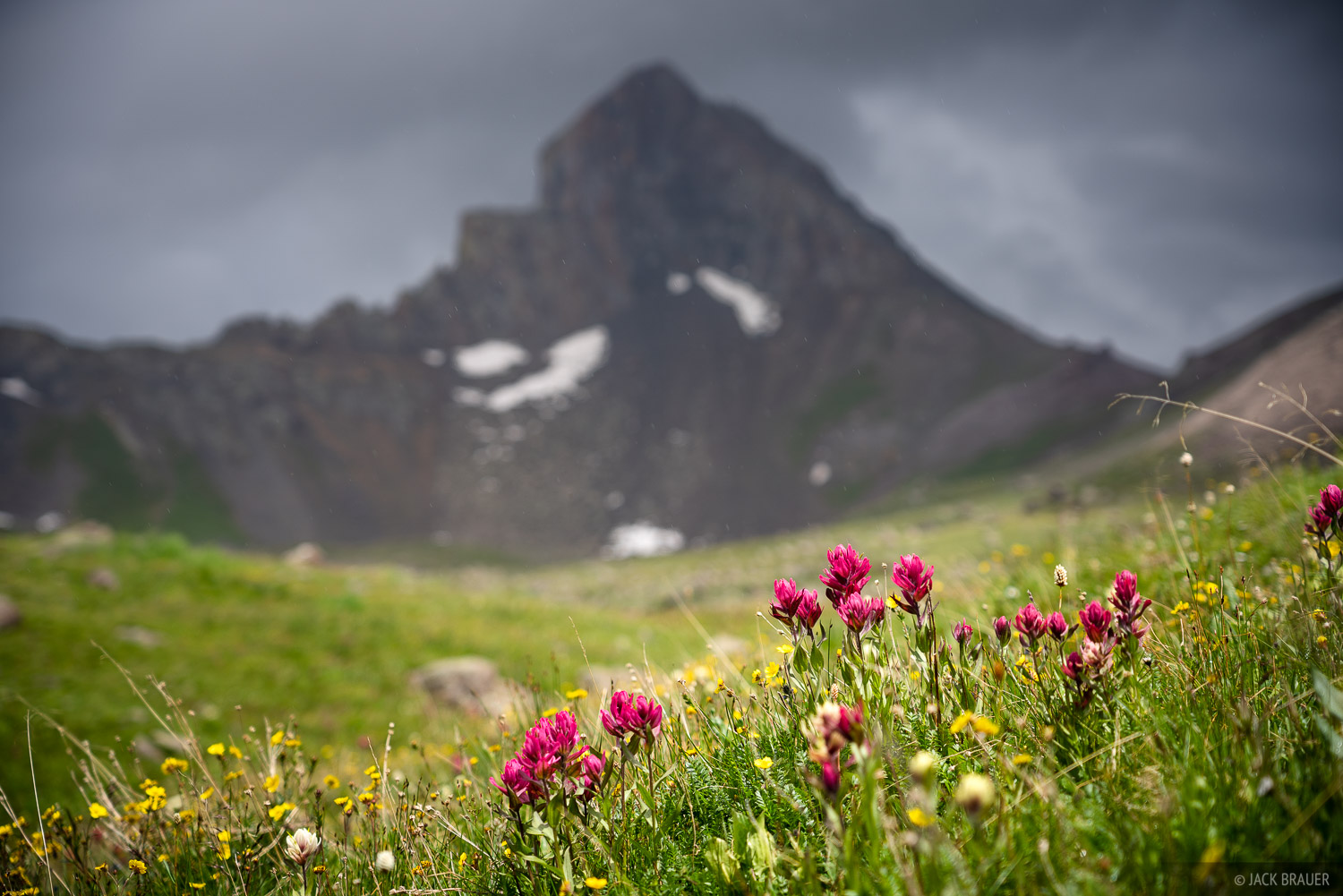 Colorado, San Juan Mountains, Uncompahgre Wilderness, Wetterhorn Basin, Wetterhorn Peak, wildflowers, photo