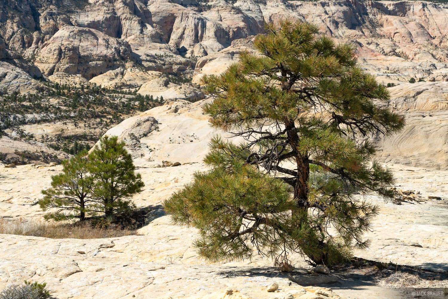 The higher-elevation region of Grand Staircase-Escalante National Monument between the towns of Escalante and Boulder, with its...