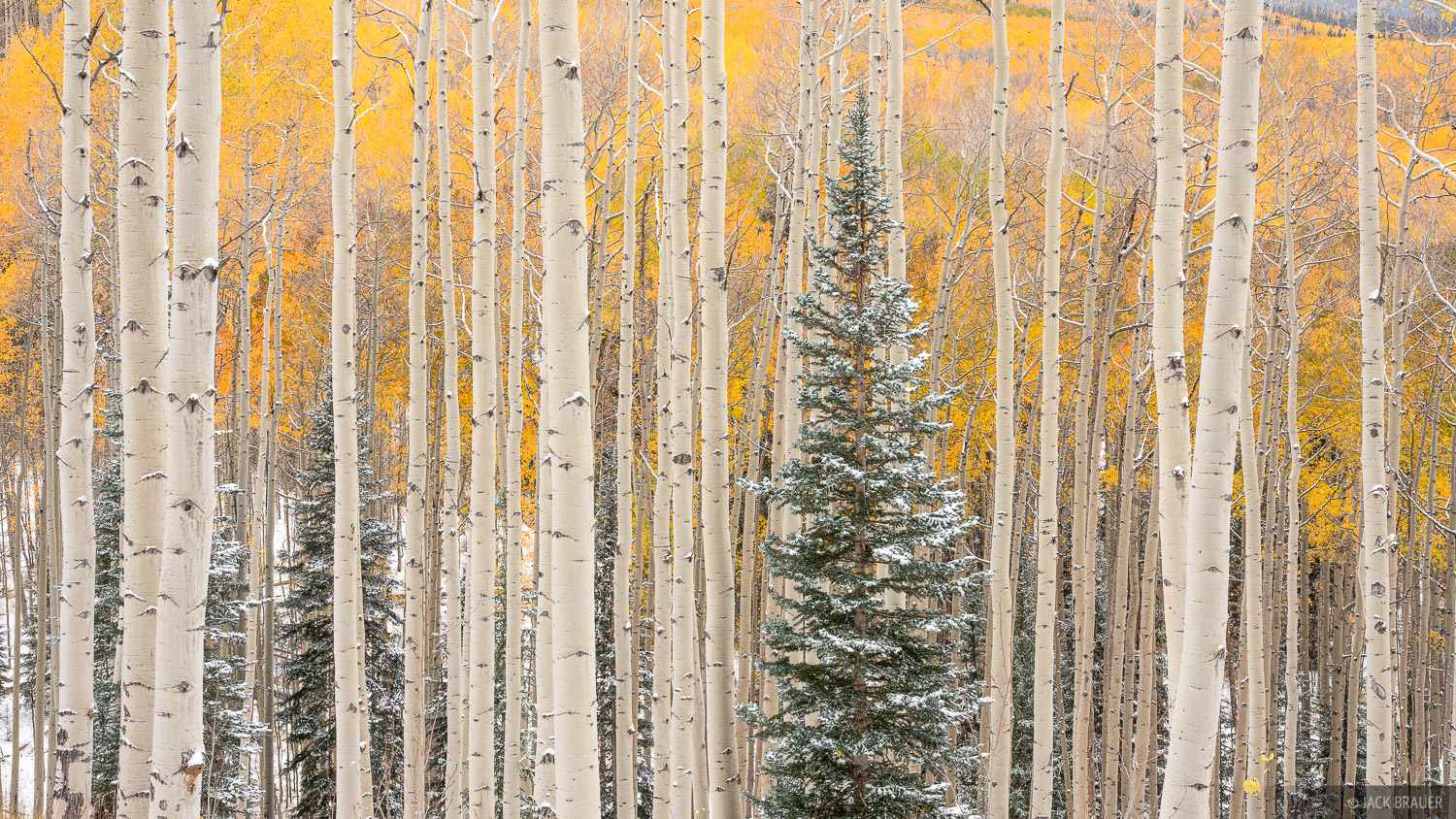 Colorado, San Juan Mountains, aspens, autumn, photo