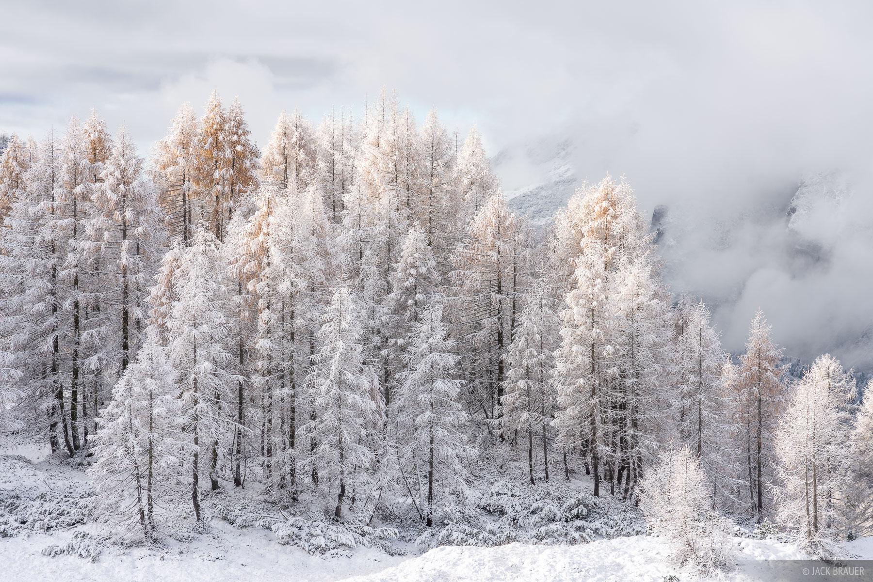 Dolomites, Italy, Parco Naturale delle Dolomiti Fruilane, larch, November, Alps, photo