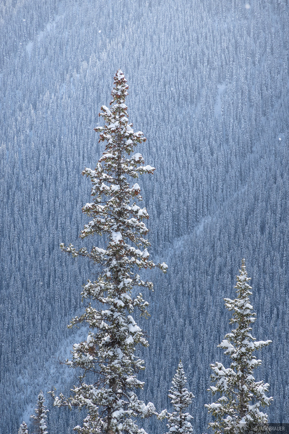 Anvil, San Juan Mountains, Colorado, snow, forest