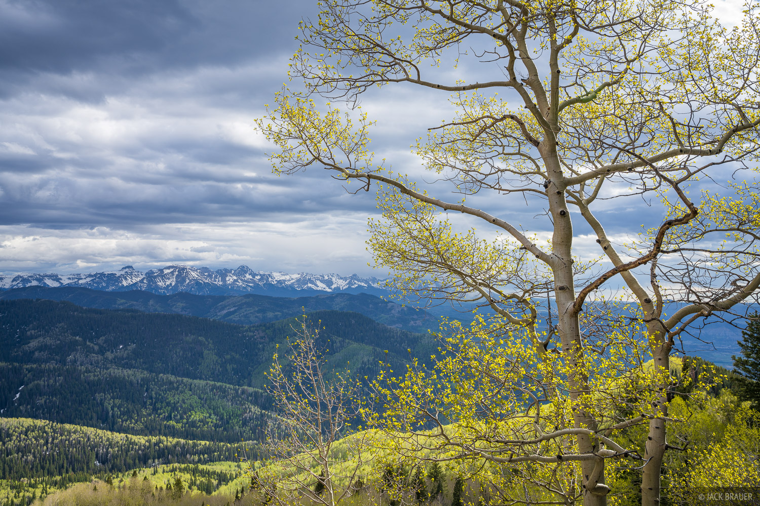 Cimarrons, aspens, Sneffels Range, Colorado, photo