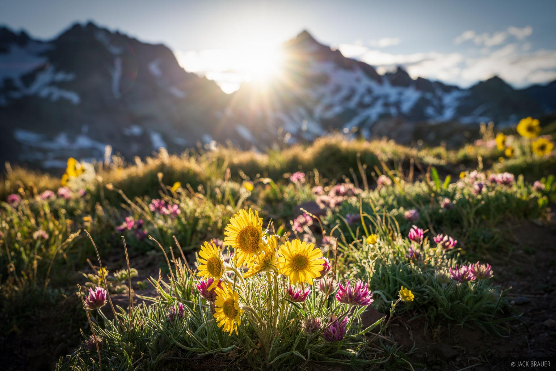 Colorado, Gladstone Peak, Lizard Head Wilderness, San Juan Mountains, San Miguel Range, wildflowers, photo