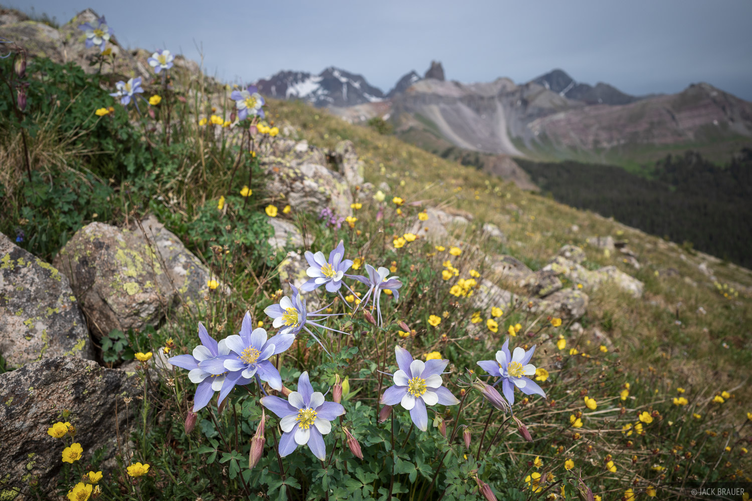 Black Face Mountain, Colorado, Lizard Head Peak, Lizard Head Wilderness, San Juan Mountains, San Miguel Range, columbine, wildflowers, photo
