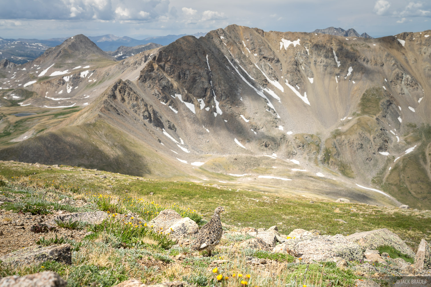Collegiate Peaks Wilderness, Colorado, Mount Belford, Sawatch Range, ptarmigan, 14ers, Missouri Mountain, photo
