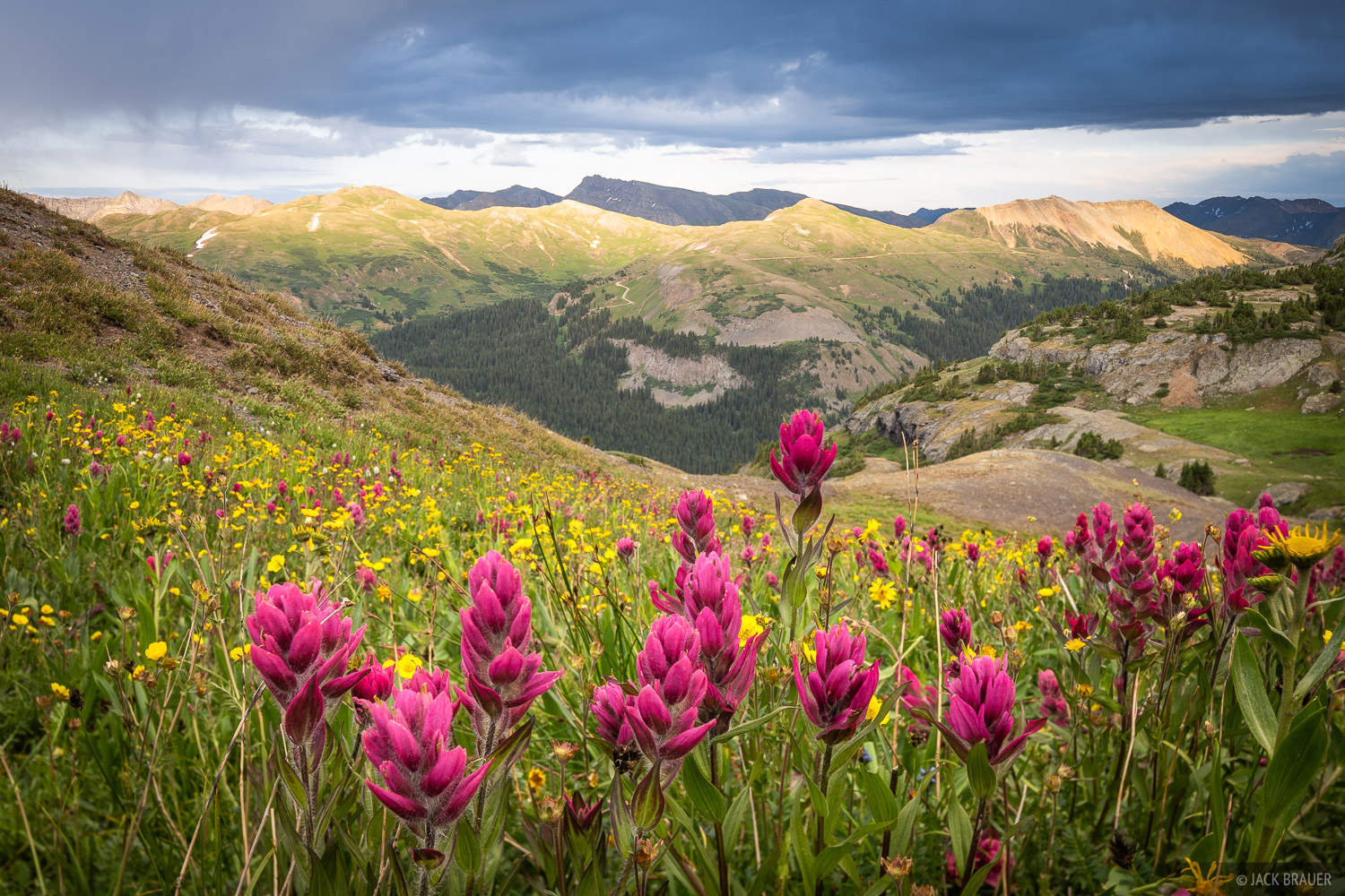 Indian Paintbrush on a cloudy evening in the San Juan Mountains between Ouray and Silverton.