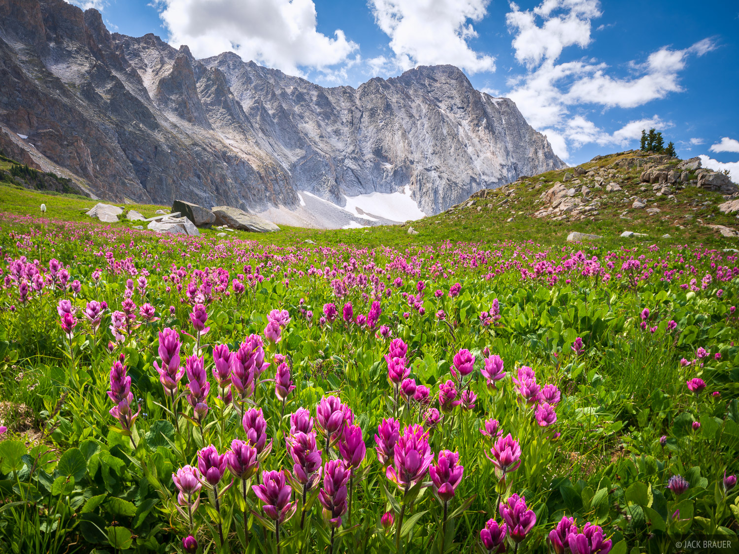 Capitol Peak, Colorado, Elk Mountains, Maroon Bells Snowmass Wilderness, wildflowers, photo