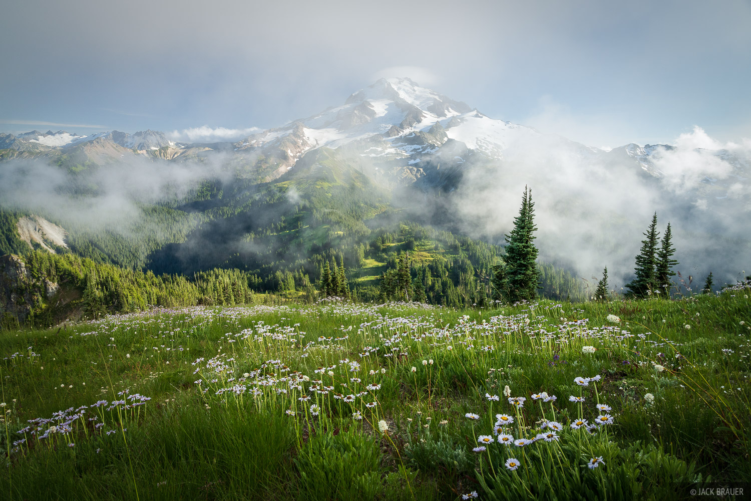 Glacier Peak, Glacier Peak Wilderness, Grassy Ridge, Washington, wildflowers, Cascades, photo