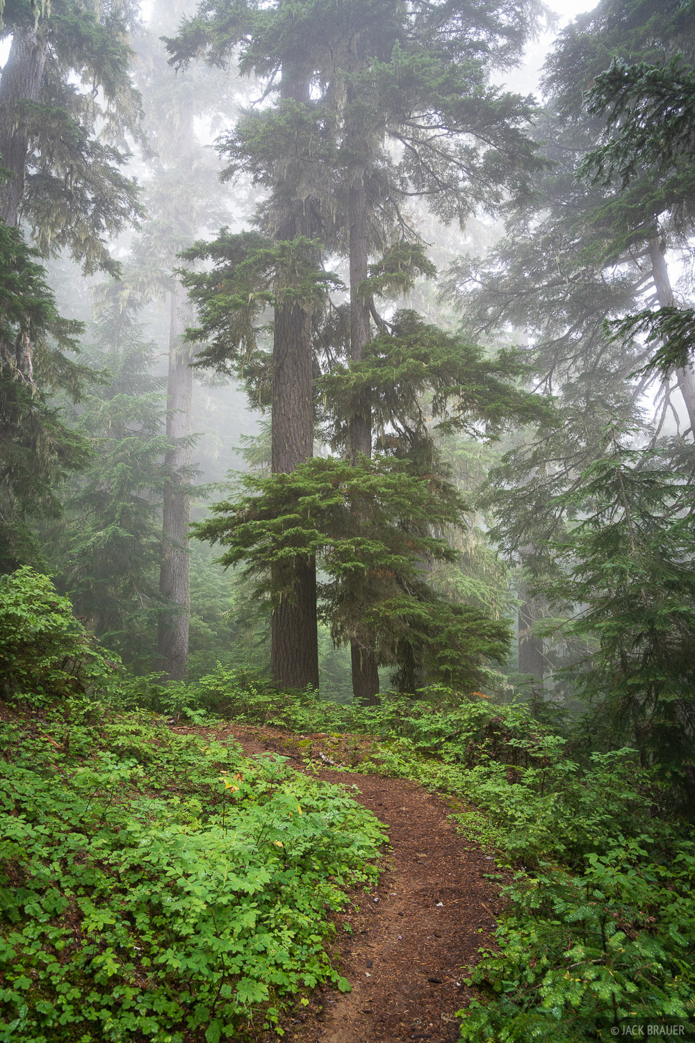 A foggy forest along the Pacific Crest Trail.