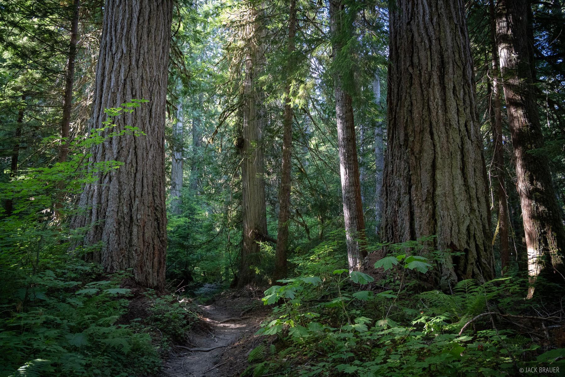 Glacier Peak Wilderness, Washington, forest, trail, Cascades, photo