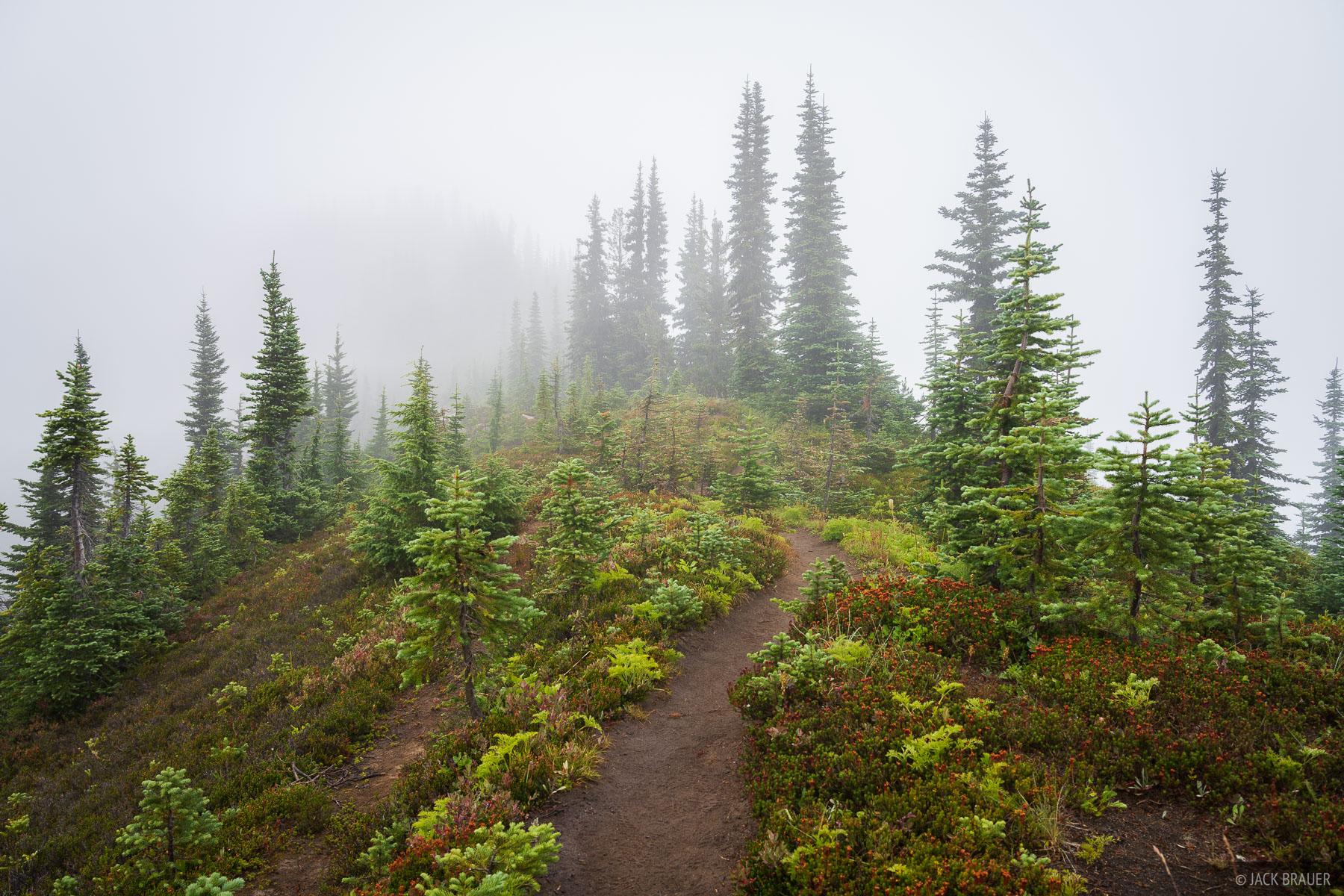 Rainy, misty weather atop Miners Ridge.