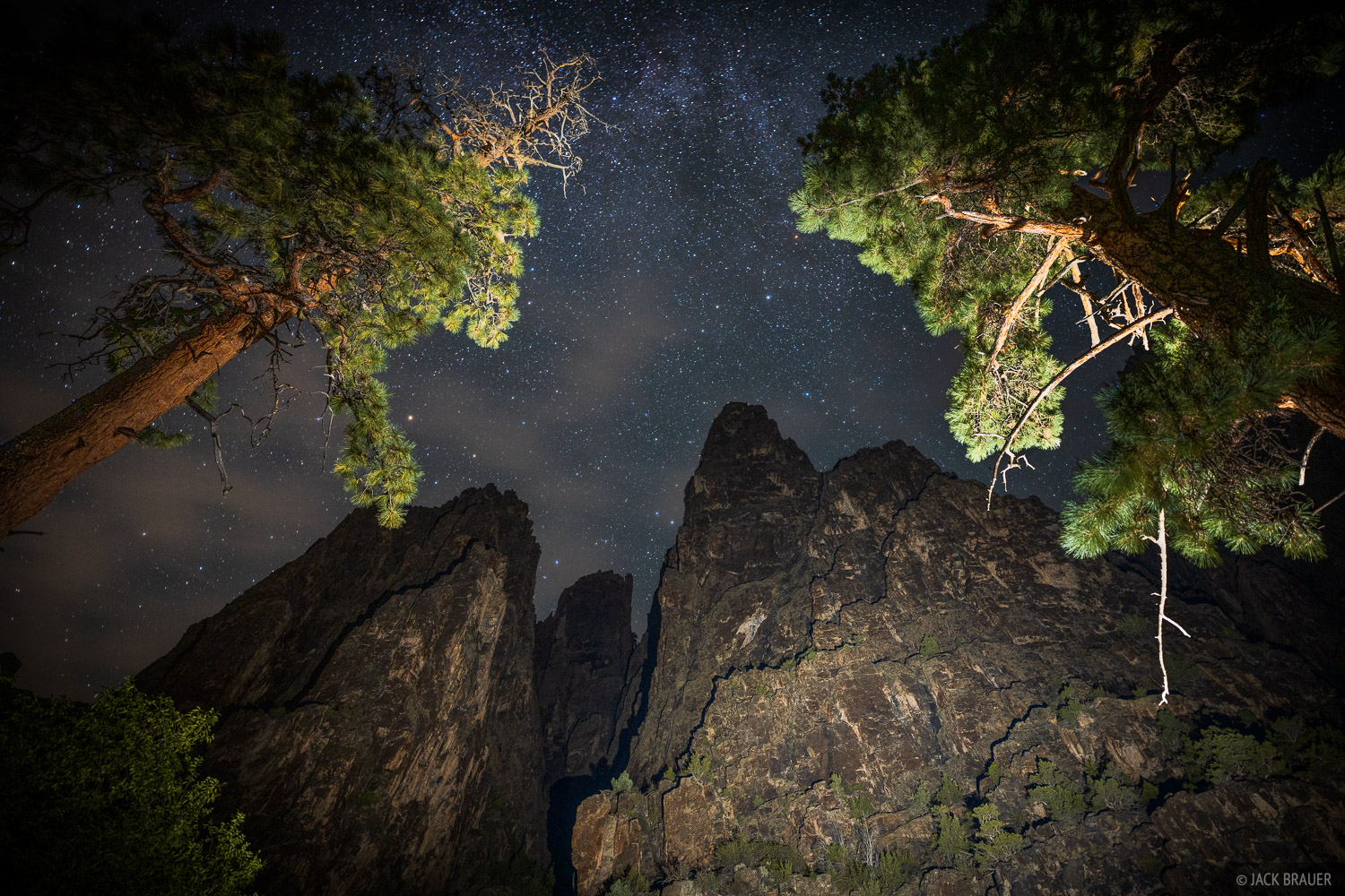 Looking straight up at the stars above giant ponderosa pines and the vertical walls of the Black Canyon, from alongside the Gunnison...