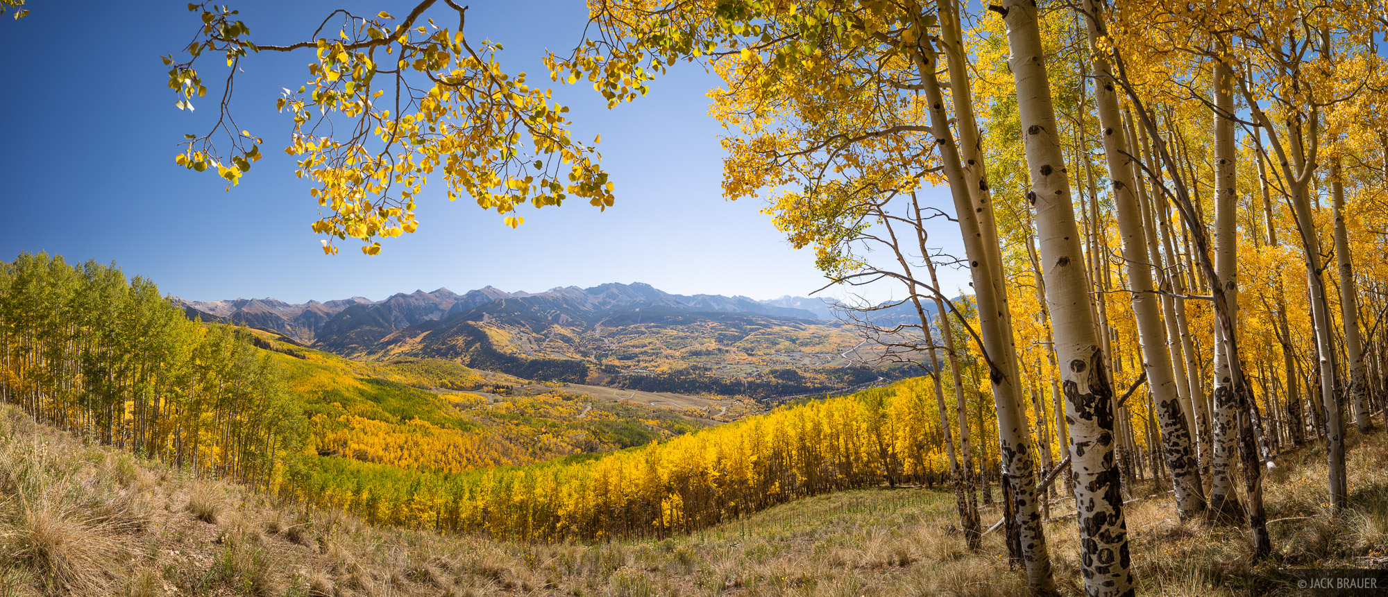 A panoramic view of golden aspens above the valley of Telluride on a crisp, clear autumn day at the end of September. Mountain...