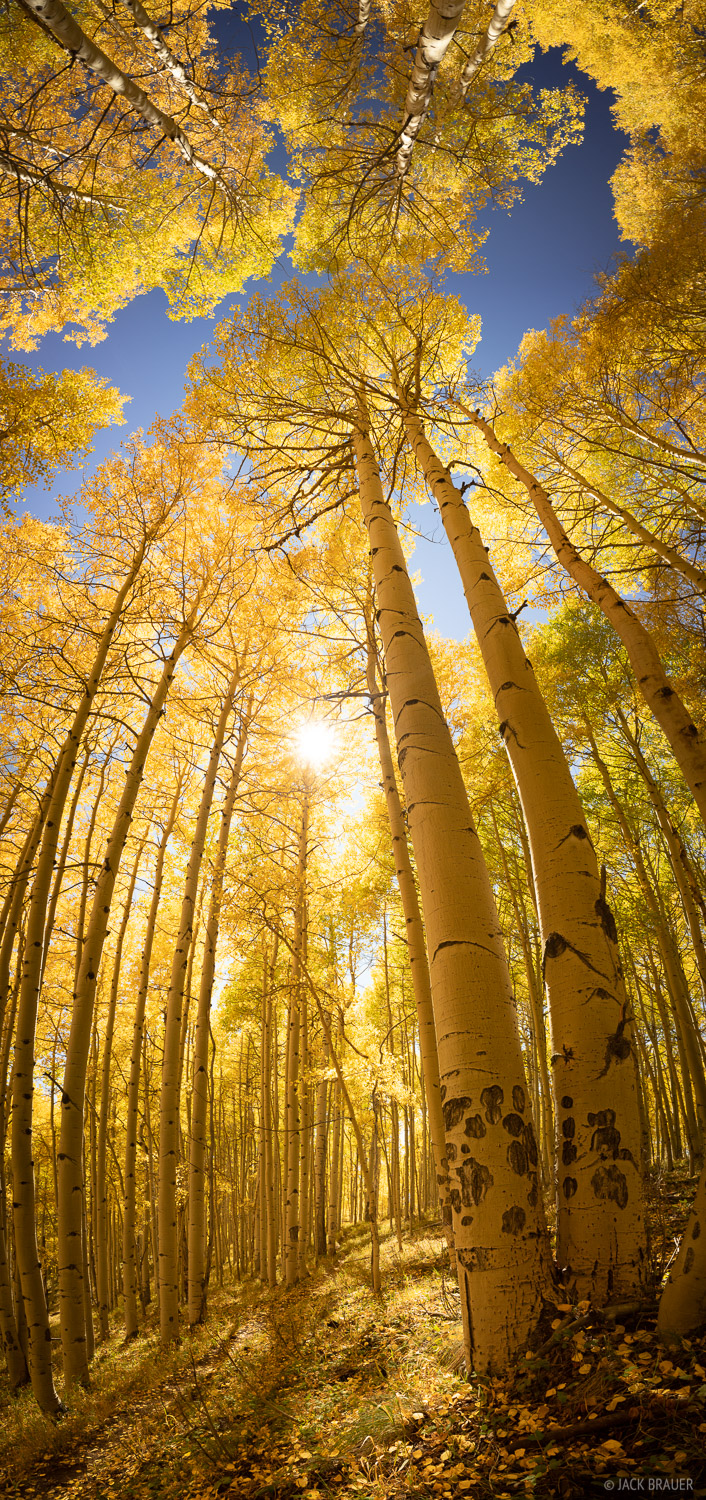 Deep Creek Trail, aspens, San Juan Mountains, Colorado, September, photo
