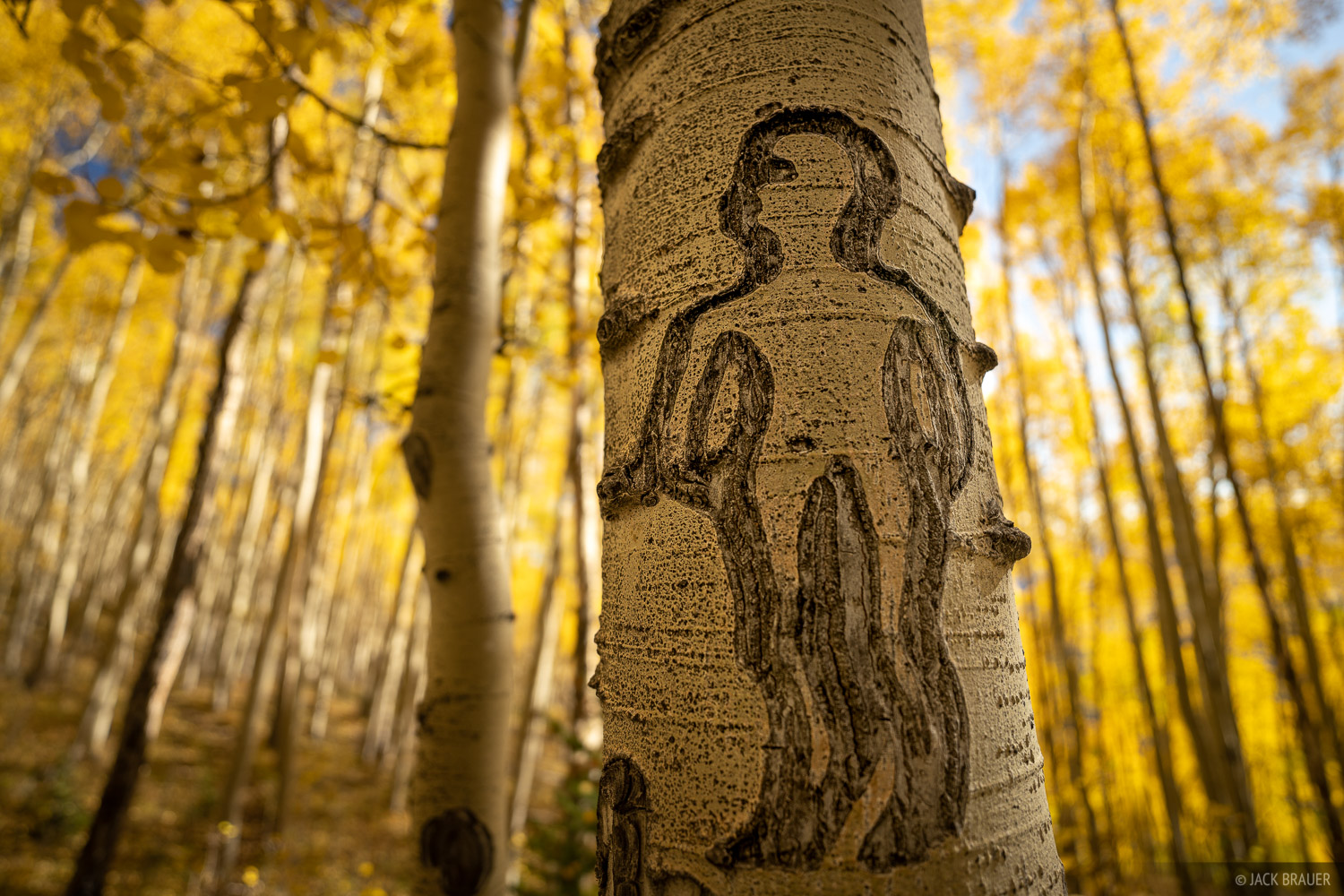 Deep Creek Trail, aspenglyph, aspens, autumn, fall, photo