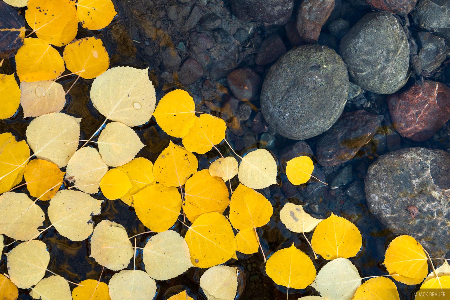 Cimarrons, Colorado, San Juan Mountains, aspens, autumn, fall, photo