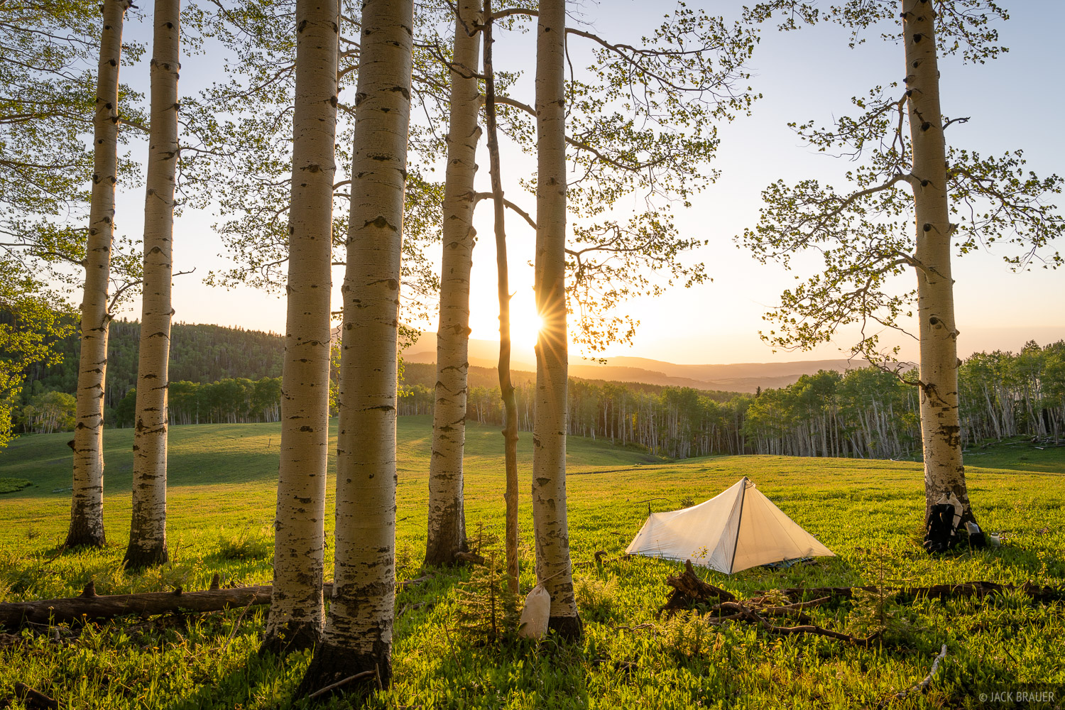An idyllic campsite in some aspens next to a mountain meadow.