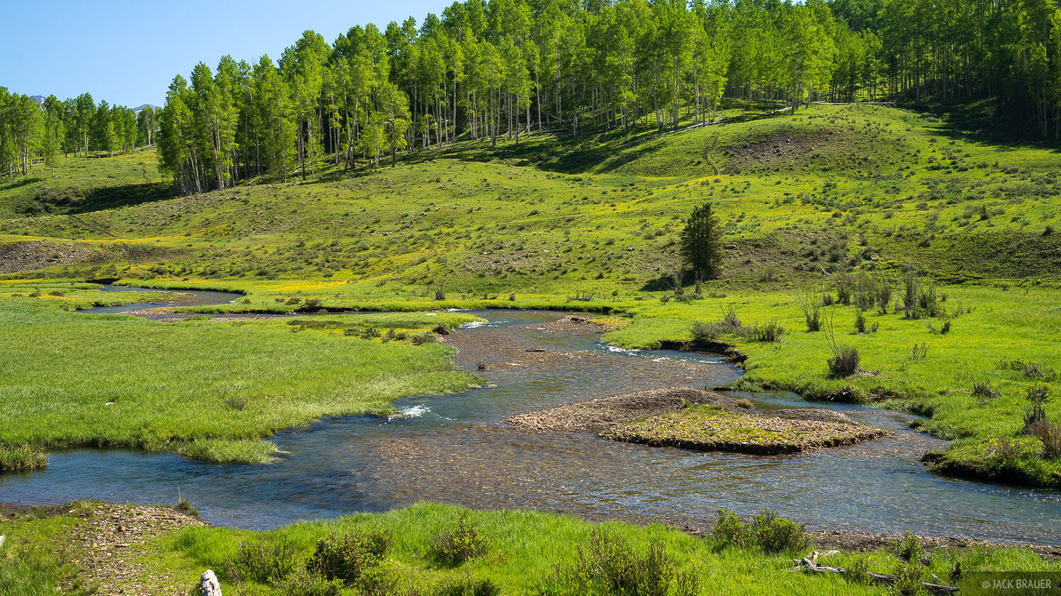 A lovely creek meandering through a green mountain meadow in the San Miguel Range.