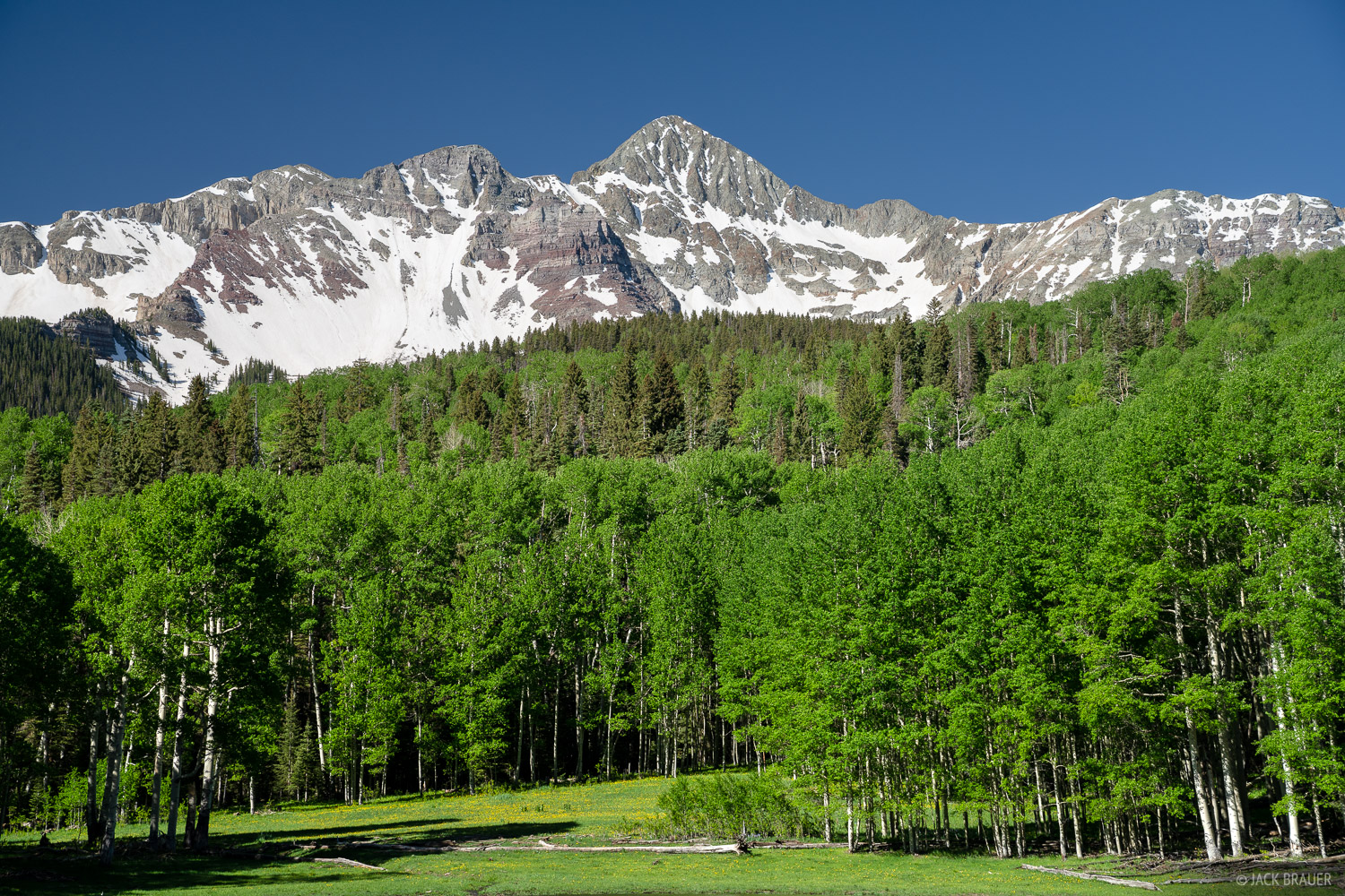 Wilson Peak (14,016 ft.) towers above a green forest of aspens.