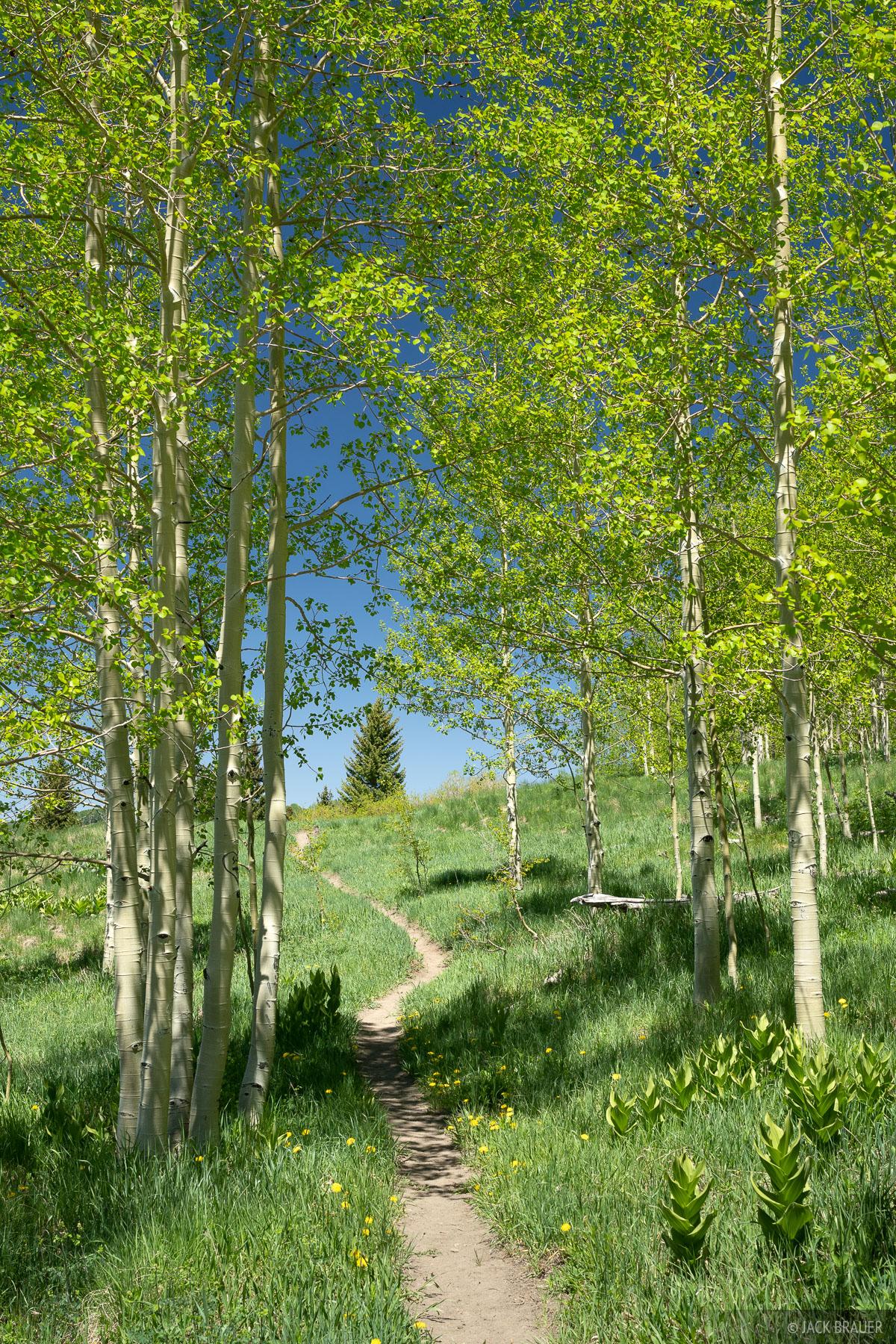 A happy little trail through happy little aspens.